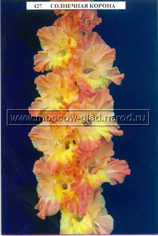 плетущие цветы многолетние фото и названия